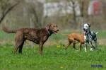 Sammy, Buck & Yogi April 2013 (11/23)