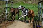 Sammy, Buck & Yogi April 2013 (16/23)