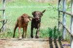 Sammy, Buck & Yogi April 2013 (19/23)