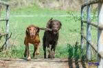 Sammy, Buck & Yogi April 2013 (20/23)