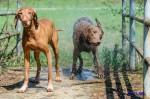 Sammy, Buck & Yogi April 2013 (21/23)