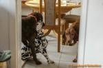 Sammy, Buck & Yogi zu Hause (1/11)
