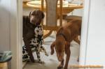 Sammy, Buck & Yogi zu Hause (2/11)