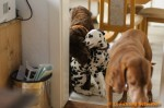 Sammy, Buck & Yogi zu Hause (3/11)