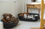 Sammy, Buck & Yogi zu Hause (7/11)
