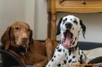 Sammy, Buck & Yogi zu Hause (9/11)