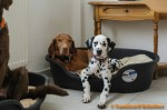 Sammy, Buck & Yogi zu Hause (10/11)
