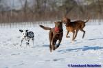 Sammy, Buck & Yogi auf dem Hundeplatz (5/37)