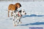 Sammy, Buck & Yogi auf dem Hundeplatz (6/37)