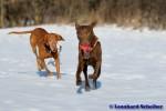 Sammy, Buck & Yogi auf dem Hundeplatz (9/37)