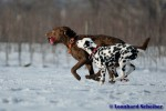 Sammy, Buck & Yogi auf dem Hundeplatz (12/37)