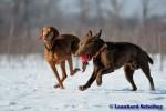 Sammy, Buck & Yogi auf dem Hundeplatz (14/37)