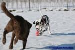 Sammy, Buck & Yogi auf dem Hundeplatz (20/37)