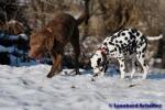 Sammy, Buck & Yogi auf dem Hundeplatz (29/37)