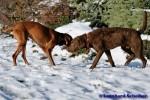 Sammy, Buck & Yogi auf dem Hundeplatz (31/37)