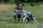 Buck und Yogi im Juli 2014 (3/11)