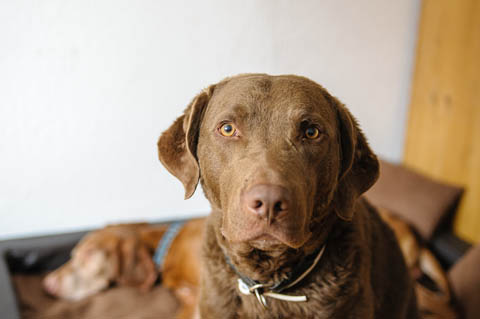Buck im Hundetagebuch