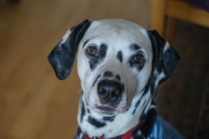 Yogi im Hundetagebuch