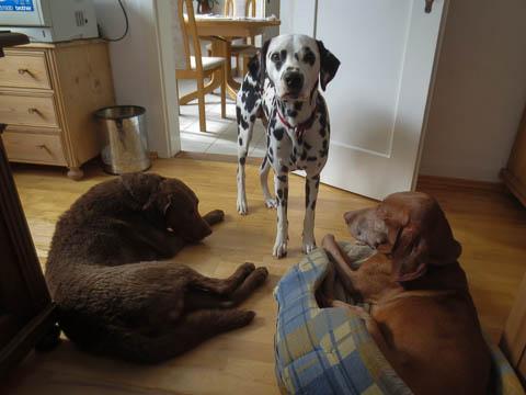My three dogs 2014