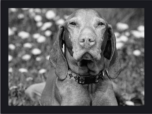 Sammy im Hundetagebuch